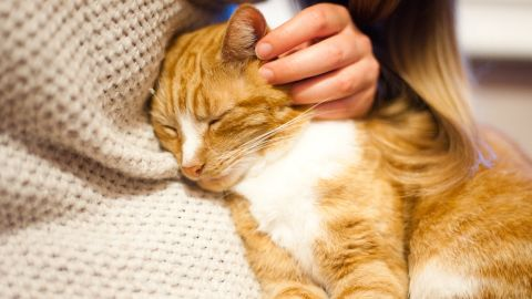 """The act of petting your cat releases the bonding hormone oxytocin, also called the """"cuddle chemical."""" The fact that your cat is purring while you're doing this is an additional stress reducer."""