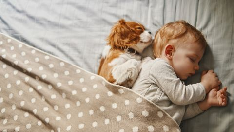 """Exposing a child to animals during the first six months of life is <a href=""""https://www.ncbi.nlm.nih.gov/pubmed/28939248"""" target=""""_blank"""" target=""""_blank"""">linked to a reduced chance of asthma </a>and allergies later in life. However, if an existing family member is allergic, having pets in the home can do more harm than good."""