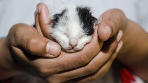 Baby animals teach children about the miracles of birth, and the responsibilities of caring for a tiny creature. The demise of a pet is also the first death experience for most children, providing a powerful teaching moment about love and loss.