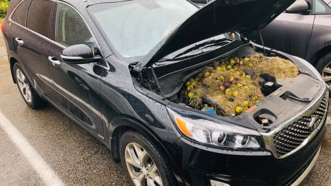 After noticing a burning smell coming from their car, a couple found this surprise under the hood.