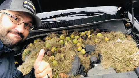 Chris Persic said some of the walnuts were roasting.