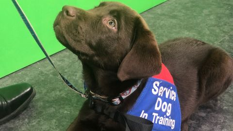 Granger, one of the puppies at the 'Puppy Pilates' class.