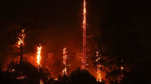 Trees burn as the fire engulfs a hillside in Geyserville.