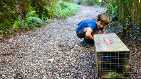 Community groups are actively involved in trapping New Zealand's unwanted pests.