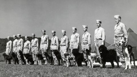 1942: A dozen dogs and soldiers stand in formation for their inspection after grooming to be inducted into the US Army at the Canine Reception Center in Front Royal, Virginia.