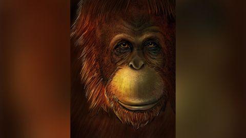 Artistic representation of Gigantopithecus blacki.