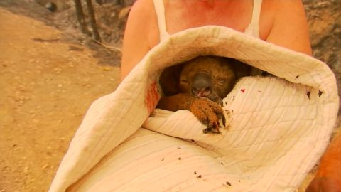 Lewis the koala was wrapped in a duvet after being rescued from a bushfire.
