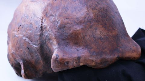 A Homo erectus skull cap discovered in Central Java, Indonesia reveals how long they lived and when the first human species to walk upright died out.