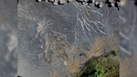 Overview of well-preserved Archaeopteris root system, left, and possible Stigmarian Isoetalean lycopsid.