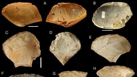 Shell tools were recovered from an Italian cave that show Neanderthals combed beaches and dove in the ocean to retrieve a specific type of clam shell to use as tools.