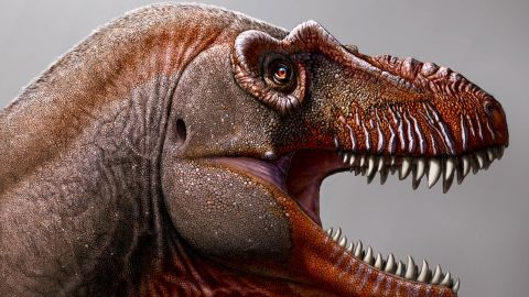 This artist's illustration shows the newly discovered Tyrannosaurus rex relative, Thanatotheristes degrootorum.