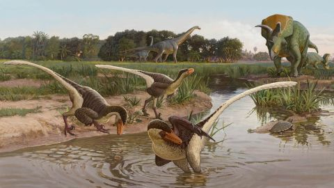 This artist's illustration of Dineobellator notohesperus shows them in an open landscape, across what is now New Mexico, along with Ojoceratops and Alamosaurus in the background.