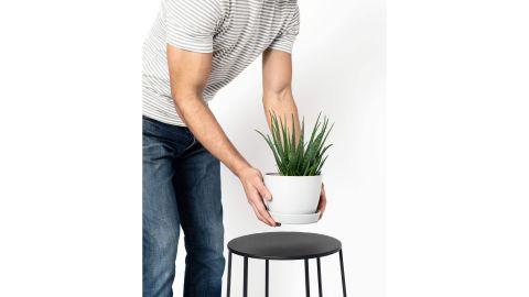 Hedgehog Aloe