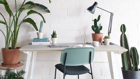 Best indoor plants for beginners