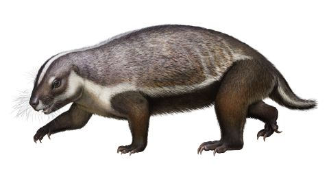 This is an artist's illustration of Adalatherium hui, an early mammal that lived on Madagascar 66 million years ago.