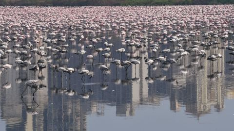 Flamingos are seen in a pond during a government-imposed nationwide lockdown as a preventive measure against the spread of the COVID-19 coronavirus in Navi Mumbai on April 20. Indranil Mukherjee/AFP/Getty Images