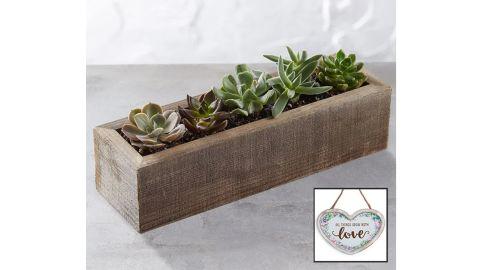 Mini Trough Succulents
