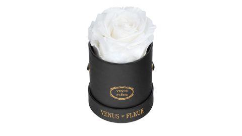 Venus ET Fleur Eternity Rose