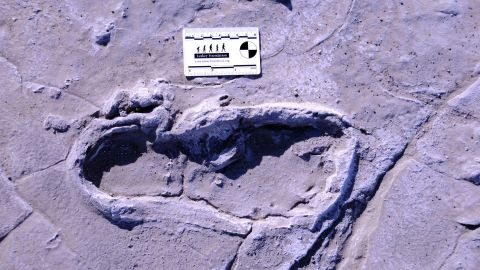 This is one of the 408 human footprints preserved at the Engare Sero site in Tanzania. The fossilized footprints reveal a group of 17 people that traveled together, likely including 14 women, two men and one juvenile male.