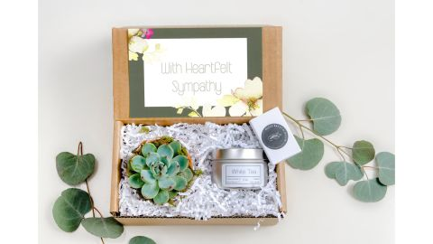 Live Succulent Gift Box
