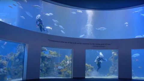 Wonders of Wildlife National Museum and Aquarium