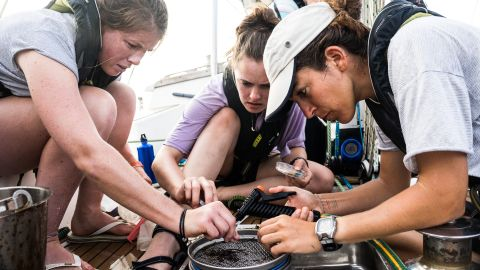 Examining a trawler sample aboard the SV TravelEdge, the vessel for the round the world eXXpedition.