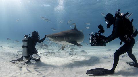 Jamin Martinelli keeping a tiger shark at bay while Joe Romeiro shoots the close encounter experiment.