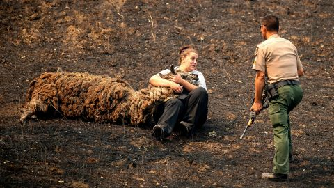 Veterinary technician Brianna Jeter comforts a llama injured by a fire in Vacaville on August 21. At right, animal control officer Dae Kim prepares to euthanize the llama.