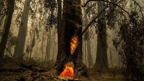 Smoke hangs low in the air at the Big Basin Redwoods State Park as some redwoods burn in Boulder Creek on August 22.