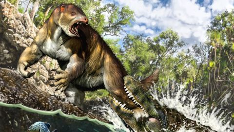 Life reconstruction of the putative attack of a young to sub-adult Purussaurus on the ground sloth Pseudoprepotherium in a swamp of proto-Amazonia.