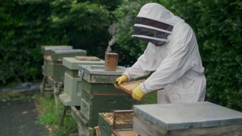 Beekeeper Simon Lynch inspects his hive