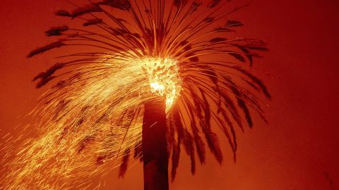 Embers fly from a tree as the Glass Fire burns in St. Helena on September 27.