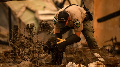 An officer with Napa County Animal Control rescues a cat after the Glass Fire passed through Napa Valley, California, on September 28.