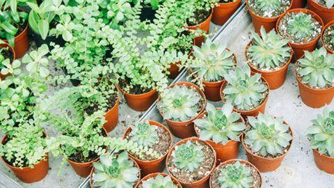 Green Thumb Gardening Bundle