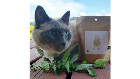 Organic Catnip Garden-in-a-Bag