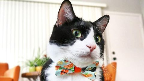 Your cat deserves to look snazzy this holiday season with a bow tie from Made by Cleo.