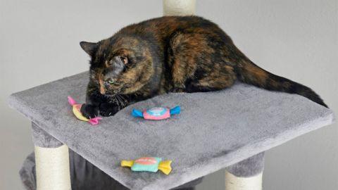 Frisco Bubblegum Cat Toys
