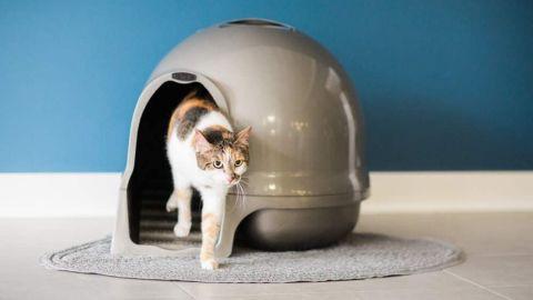 Petmate Booda Dome Clean Step Litter Box