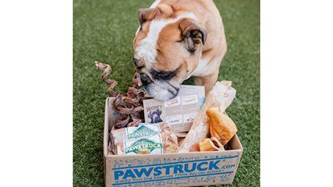 Pawstruck Chew Box