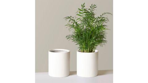 Burbank Lightweight Planter