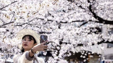 A woman takes a selfie with cherry blossoms in full bloom along the Meguro river in Tokyo on March 26, 2021. (Photo by Behrouz MEHRI / AFP) (Photo by BEHROUZ MEHRI/AFP via Getty Images)