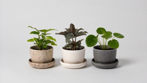 Harmony Mini Planters