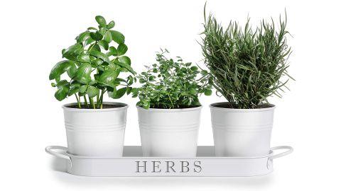 Barnyard Designs Herb Pot Planter Set