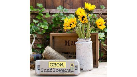 Sunflower Garden Grow Kit