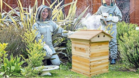 LangLang Automatic Wooden Beehive House Kit