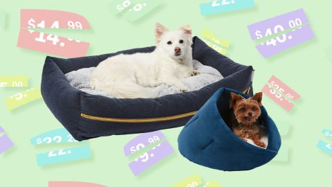 Chewy Pet Beds