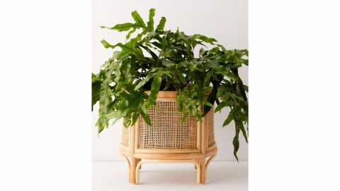 Urban Outfitters Rattan Planter