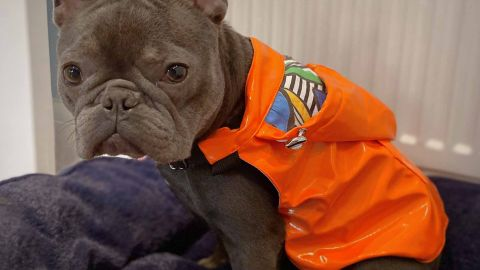 K9Wear Dog Raincoat