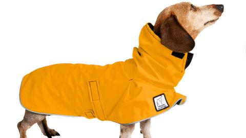 VoyagersK9Apparel Miniature Dachshund Raincoat