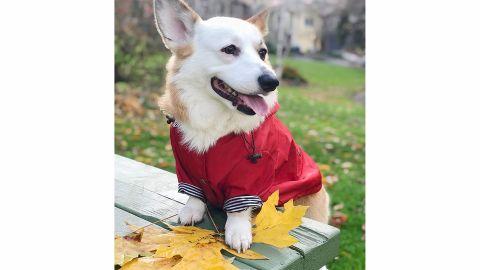 Ellie Dog Wear Premium Raincoat